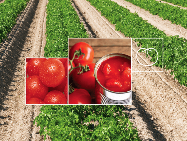 Processed Tomato Irrigation Solutions