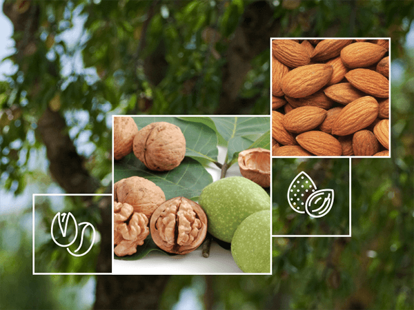 Nut Irrigation Solutions